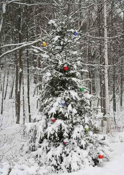 kerstboom in de sneeuw